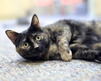 Meet Kirsty! 1-year-old independent girl in need of a forever playmate!