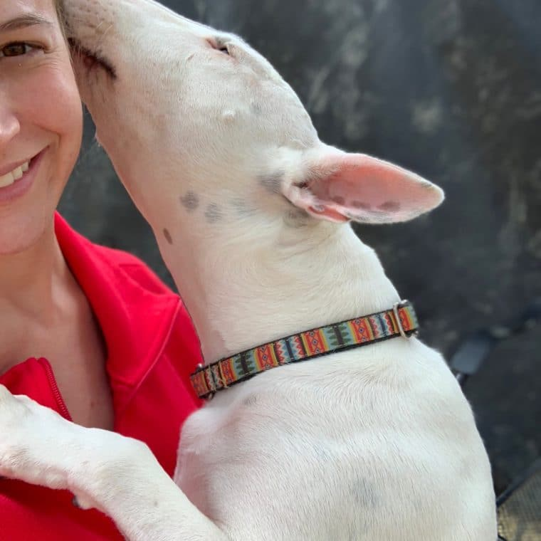 white terrier kissing woman
