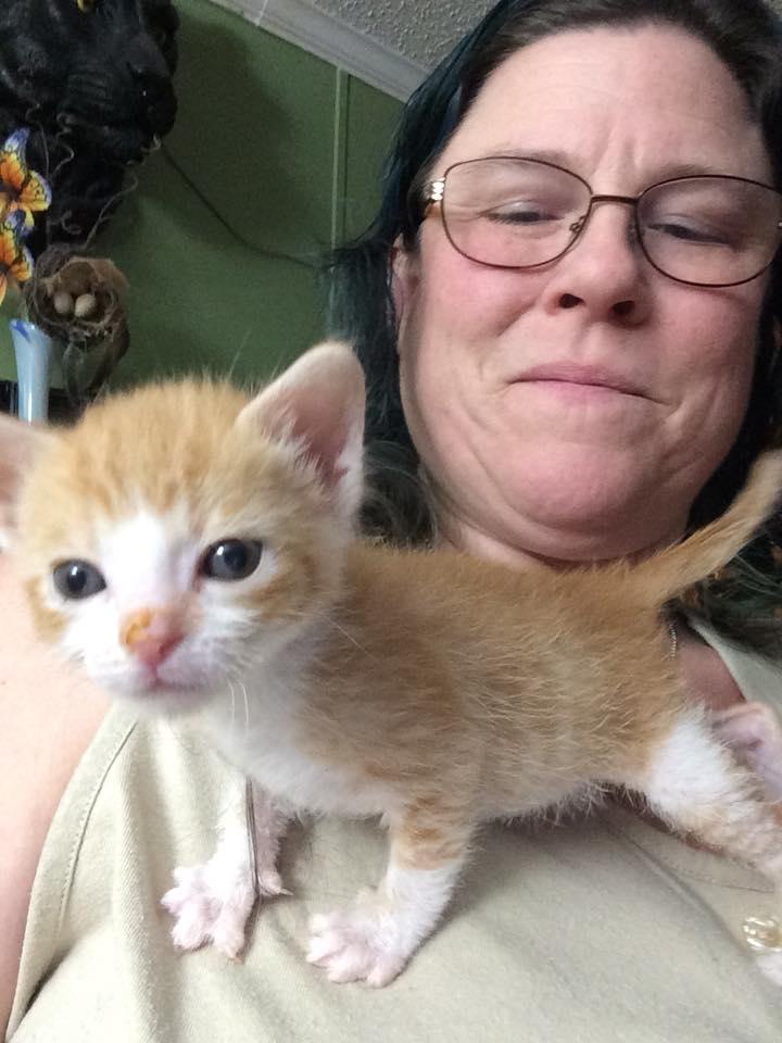 Help I Found A Newborn Kitten Now What Pawmetto Lifeline