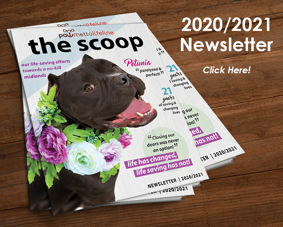 2020 2021 Newsletter Home Page