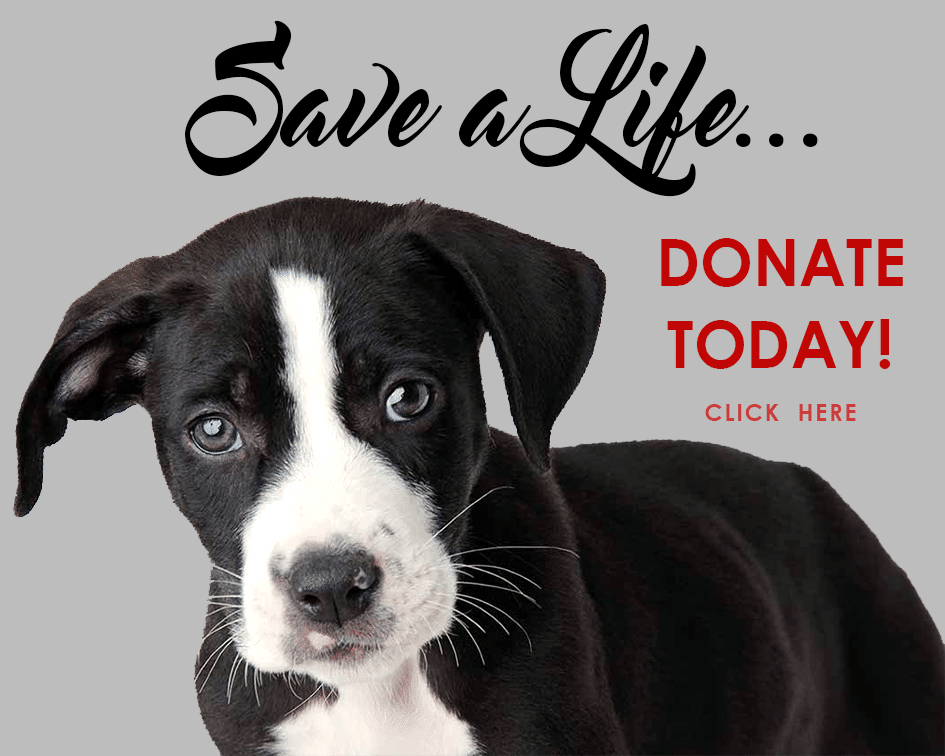 Donate Puppy Home Page